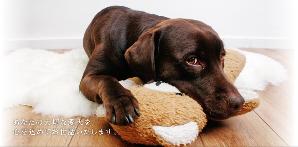 あなたの大切な愛犬を心をこめてお世話いたします。